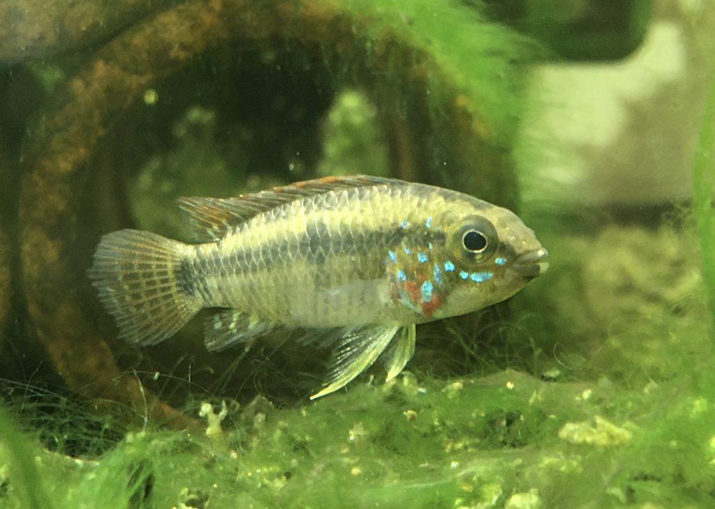 D39 若魚
